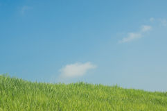 Green grass natural background. On blue sky background royalty free stock photos