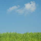 Green grass natural background. On blue sky background stock photos