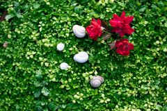 Green grass natural background with red flower. Top view royalty free stock photography