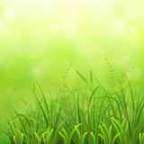 Green grass natural background. Spring green grass natural background stock illustration