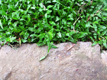 Green grass natural background Royalty Free Stock Photography