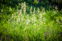 Green grass natural background texture. Stock Photography