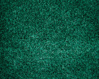 Green grass natural background texture. Royalty Free Stock Photo