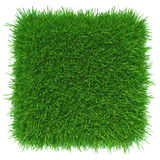 Green grass. natural background texture. Stock Images