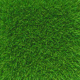Green grass. natural background texture. Royalty Free Stock Photos