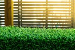 Green grass. natural background texture. fresh spring green grass. - Image. Green grass. natural background texture. fresh spring green grass royalty free stock photos