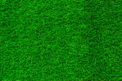 Green grass. natural background texture royalty free stock photo