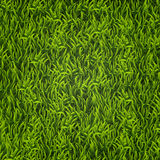 Green grass. Natural background. Texture. Tall grass. Fresh spring green grass. Stock Photography