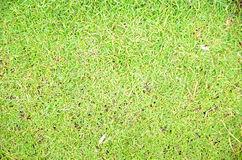 Green grass natural background Royalty Free Stock Images