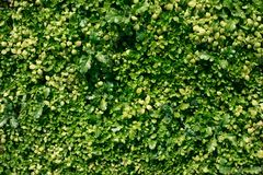 Green grass natural background. Top view stock images