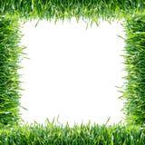 Green grass. Natural frame royalty free stock photo