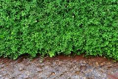 Green grass natural Stock Image