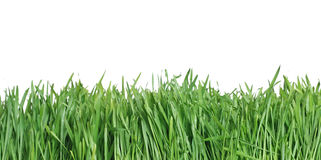 Green grass, the nature backgr. Ound Stock Photography