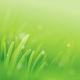 Green grass. Nature background. Green grass. Abstract nature background vector illustration