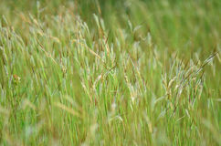 Green grass in nature Stock Photo