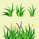 Green grass nature design elements vector illustration  grow agriculture nature background Royalty Free Stock Images