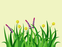 Green grass nature design elements vector illustration  grow agriculture nature background Stock Photo