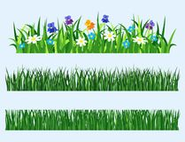 Green grass nature design elements vector illustration isolated grow agriculture nature background Stock Image