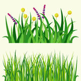 Green grass nature design elements vector illustration isolated grow agriculture nature background. Spring garden texture land season natural plants Royalty Free Stock Photos