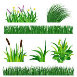 Green grass nature design elements vector illustration isolated grow agriculture nature background Royalty Free Stock Photo