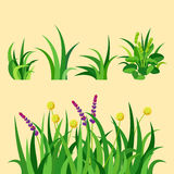 Green grass nature design elements vector illustration isolated grow agriculture nature background Stock Photo