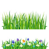 Green grass nature design elements vector illustration isolated grow agriculture nature background. Spring garden texture land season natural plants Stock Photo