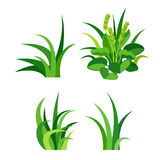 Green grass nature design elements vector illustration isolated grow agriculture nature background Royalty Free Stock Photography