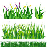 Green grass nature design elements vector illustration isolated grow agriculture nature background Stock Images