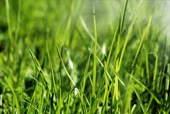 Green grass. Nature photography of green grass in the morning light made 2014 Stock Images