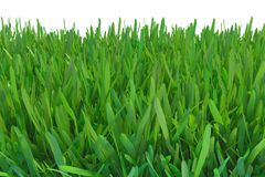 Green grass nature. plants lawn. 3d rendering natural background.  stock illustration
