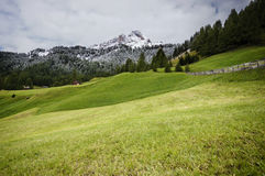 Green Grass Near Green Trees during Daytime Royalty Free Stock Photo