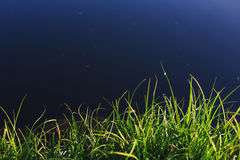 Green grass near river. Green grass near blue river Royalty Free Stock Photos