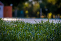 Green Grass. Near a swimming pool Stock Image