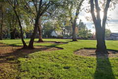 Green grass and oak trees. In a public park Stock Photos