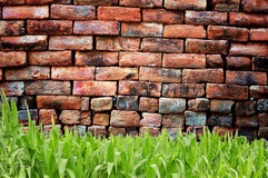 Green grass and old brickwall Stock Image