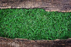 Green grass with old wood frame. Green grass in the old wood frame Royalty Free Stock Images