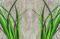 Green grass on the old wood Stock Photo