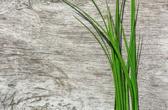 Green grass on the old wood Royalty Free Stock Photo