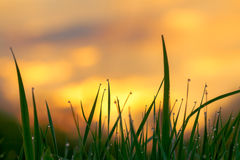 Green Grass On Background The Sky At Sunrise Royalty Free Stock Photos