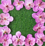 Green grass and orchid flower Stock Photography