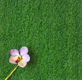 Green grass and orchid flower Stock Images