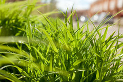 Green grass outdoors Royalty Free Stock Photo