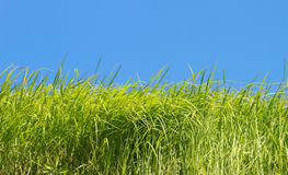 Green grass over blue sky Stock Image
