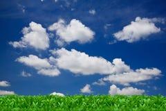 Green grass over a blue sky Royalty Free Stock Photos