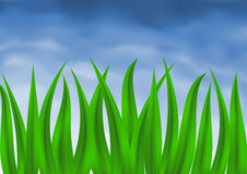 Green grass over blue sky Stock Image