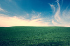 Green grass over blue sky background Stock Image