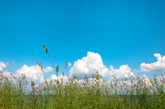 Green grass over a blue sky Royalty Free Stock Images