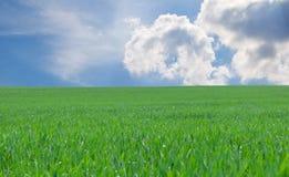 Green grass over blue sky Stock Photo