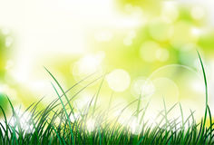 Green grass over blur abstract Royalty Free Stock Photo