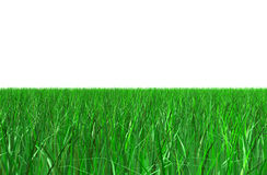 Green grass over white Royalty Free Stock Image